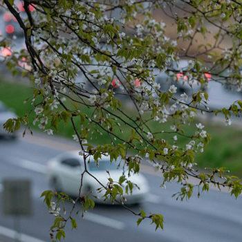 filtro de habitáculo esencial en primavera contra el polen